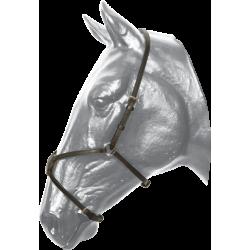 Nánosník mexický Kentaur 10010